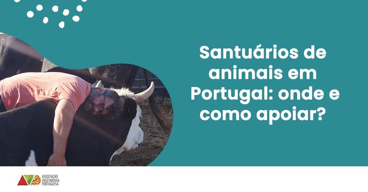 santuarios animais em portugal onde como apoiar